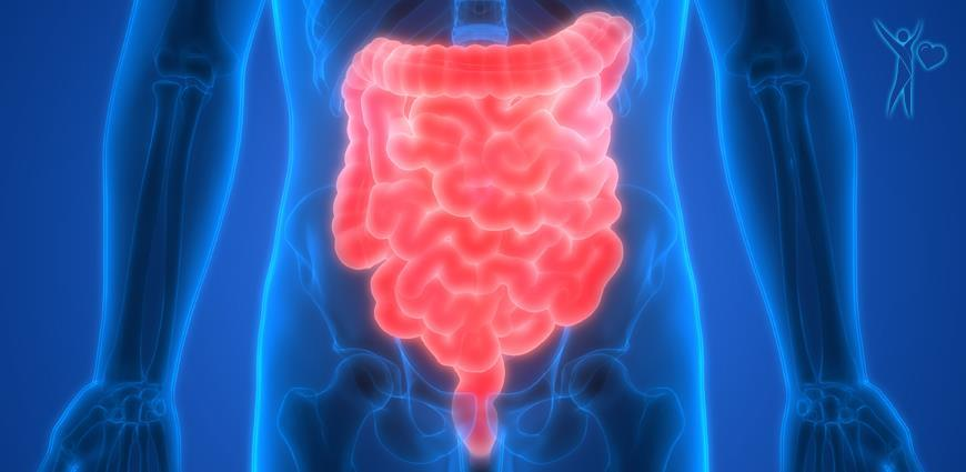 PROBIOTIC BACTERIA TO PROFIT THE GUT HEALTH